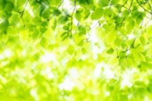新緑%u3000申込画像
